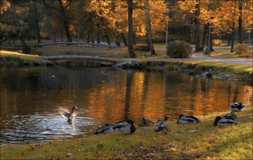 Приветствую тебя, Осень!