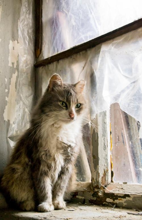 Котинька котик.