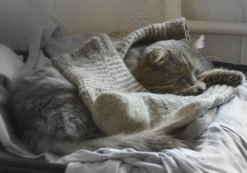 Ему-уютно,мышам-комфортно :-)