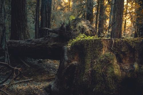 в темно синем лесуууу....