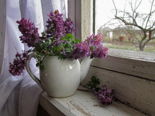 Про чайник, окно и первоцветы