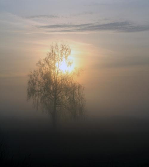 Одиночество в тумане