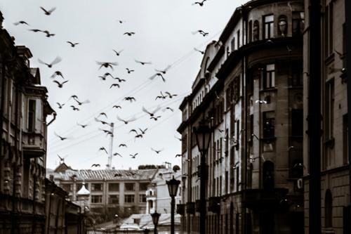 Задевая крыльями дома