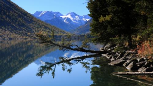 Лиственница над озером