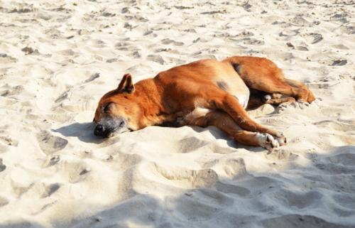 Уснул в тени ...