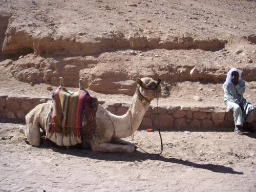 Бедуин в Египте