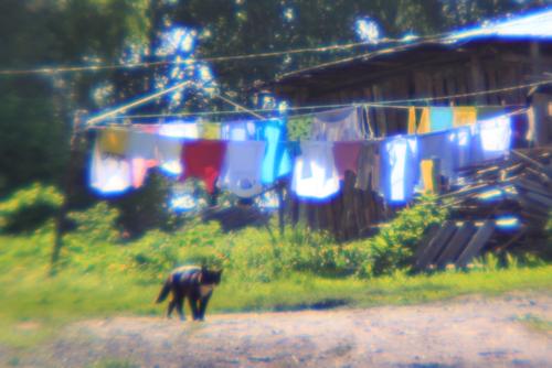 Белый день, чёрный кот