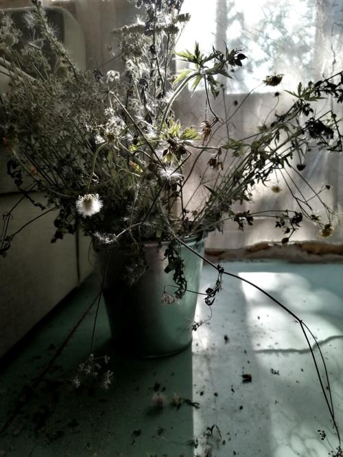 Ведро. Сухие цветы.